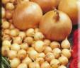 Arpadzik – semenski luk